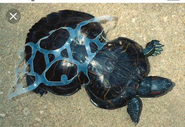 Anillas de cartón biodegradable para substituir las de plástico