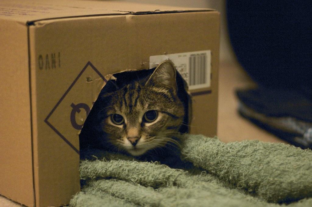 Cualquiera que tenga un gato sabe que regalarle una caja de cartón le puede hacer feliz.