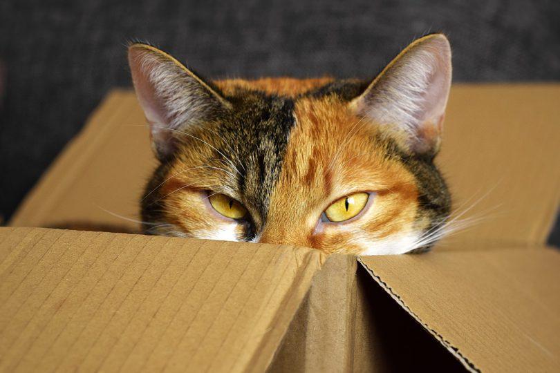 Gatos y cajas de cartón