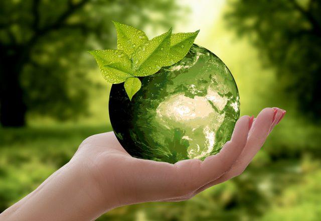 El mundo apuesta por embalajes ecológicos