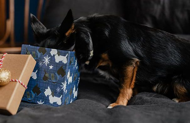 Divertir a los perros con la ayuda de cajas de cartón